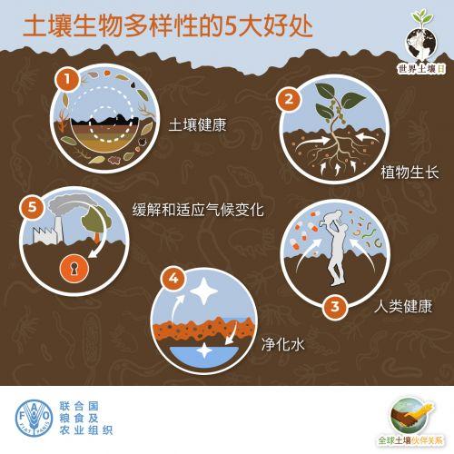 土壤生物多样性的好处